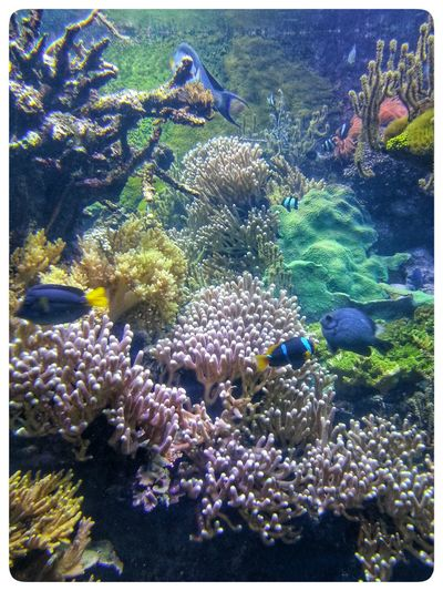 Underwater Sea Life Coral Fish Water No People Full Frame Nature Animal Themes Backgrounds Close-up Acquario Di Genova Aquarium Tank Through The Glass Through The Window Smartphone Photography