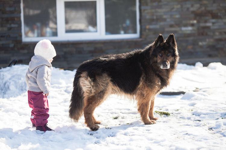 Full length of dog on snow