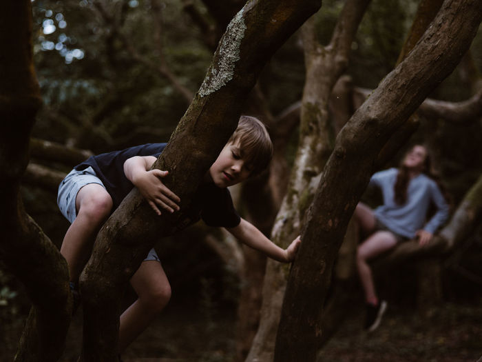 Children climbing trees in forest