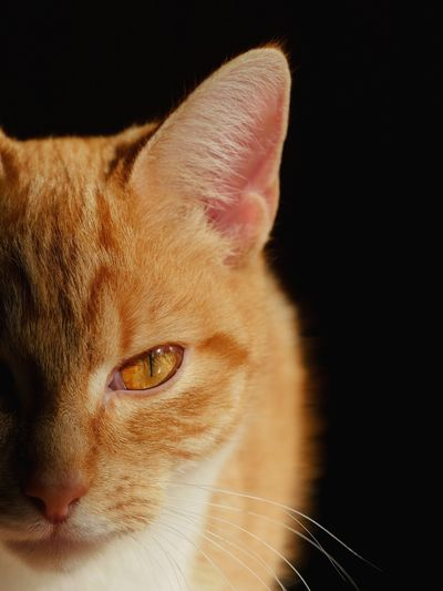 Close-up portrait of cat