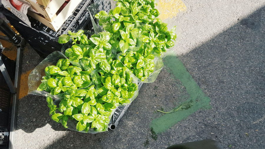 High Angle View Outdoors Day Green Color Food And Drink Healthy Eating Freshness Sunlight No People Vegetable Market Food Growth Nature Close-up Italy Vegetables Freshness Colorful Retail  Choice Market Market Stall For Sale Price Tag