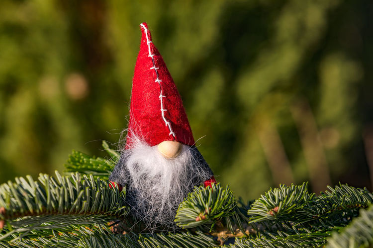Close-up of small christmas tree