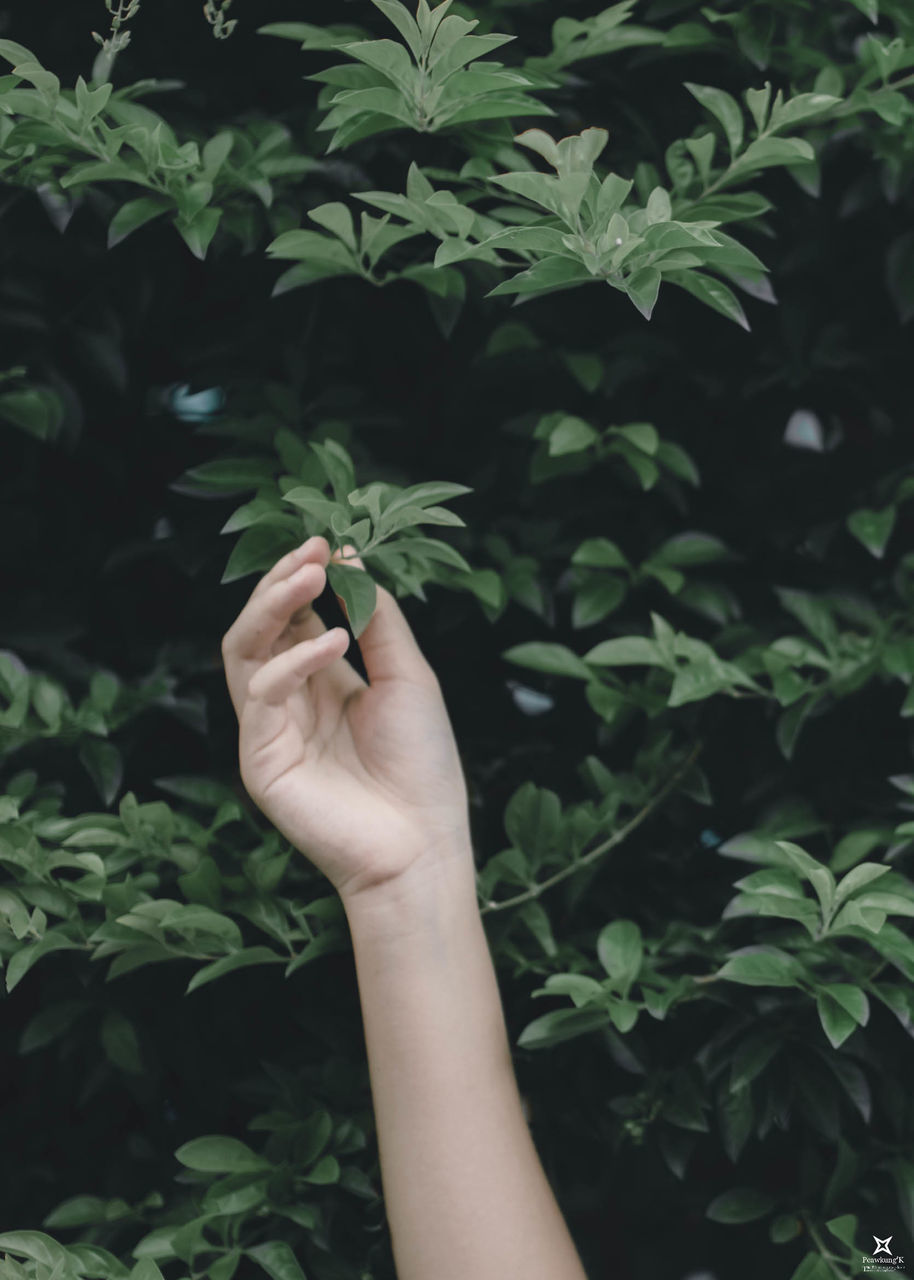 real people, plant, holding, plant part, leaf, hand, lifestyles, growth, human hand, green color, nature, one person, human body part, social issues, marijuana - herbal cannabis, narcotic, personal perspective, leisure activity, herb, finger