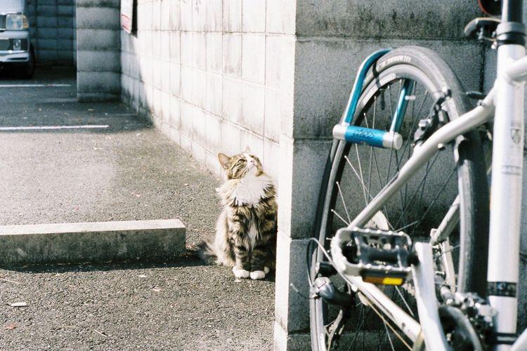 Cat Snapshot Film Natura1600 Oldlens Leica Japan