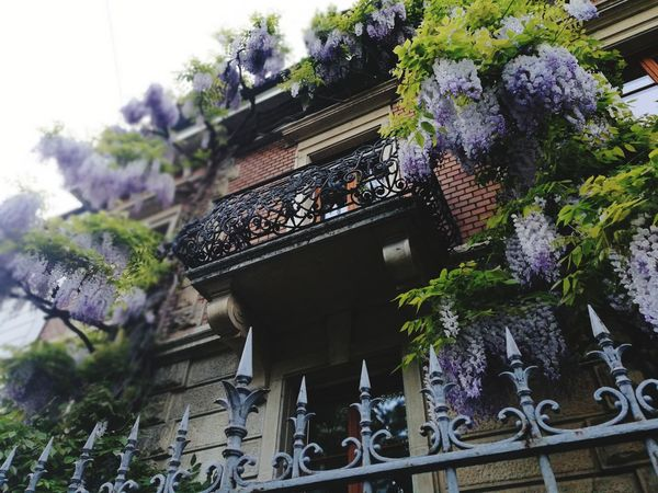 Balcony Growth Tree Architecture Flower Low Angle View Plant Built Structure Building Exterior Day Outdoors No People Nature Window Box