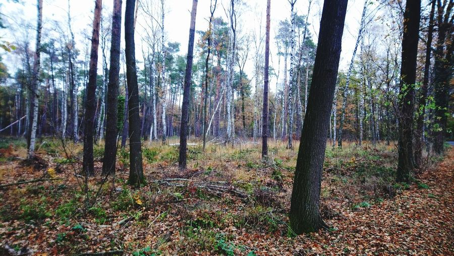 Wald, Herbst