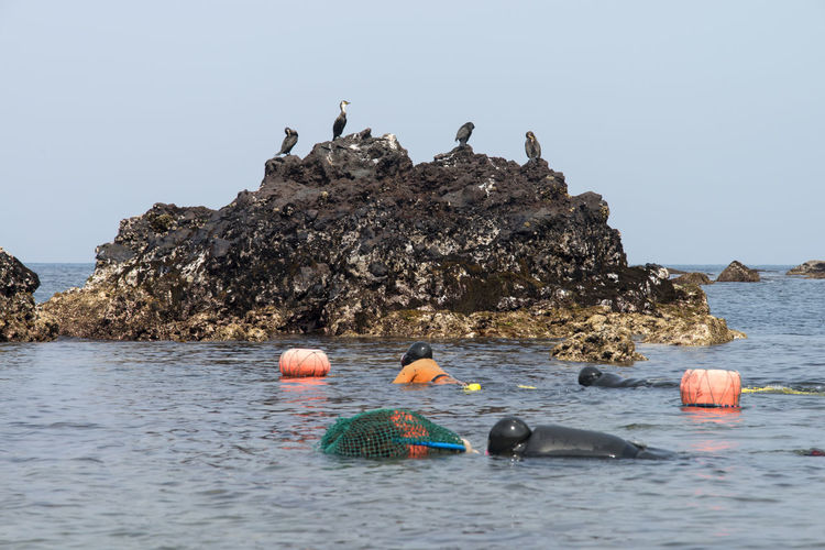 haenyeo who is a female diver picking up sea weed and sea food Beauty In Nature Bird Clear Sky Cormorant  Day Female Diving Duck Haenyeo Horizon Over Water JEJU ISLAND  Mammal Nature No People Outdoors Perching Rock - Object Scenics Sea Seaside Sky Water