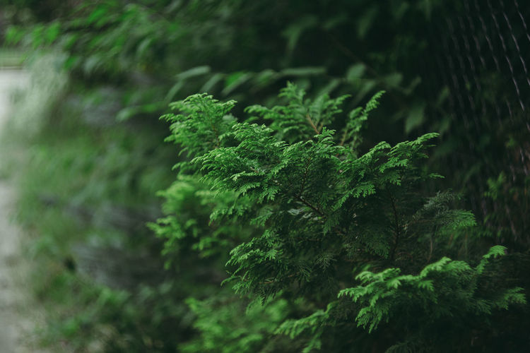 Atmosphere Autumn Green Green Color Helios Helios 44M 58mm F2 The Week On EyeEm Bokeh Bokeh Photography Close-up Day Growth Macro Nature No People Outdoors Plant