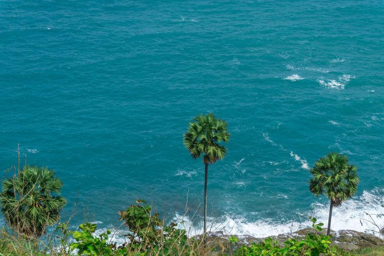 Sugar palm trees on the beach. Nature Phuket Thailand Travel Tree Wave Backgrounds Bay Island Ocean Sea Sea And Sky Seascape Sugar Palm Waves, Ocean, Nature