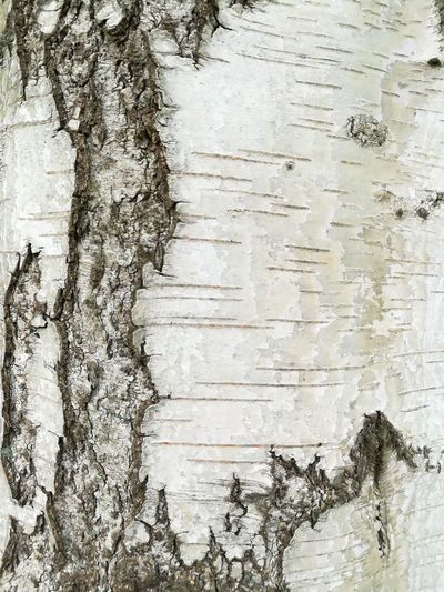 Treeskin 2 Nature Tree Tree Textured  Backgrounds Full Frame Wood - Material Close-up Bark