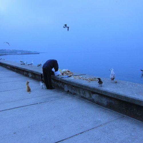 Kedi Marti Karga hepsi nasipleniyor Sabah vakti sahil de cat animal bird crow coast seaside sea deniz blue mavi istanbul seagull marmara