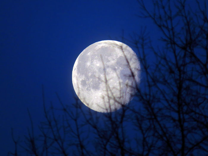 Sky Bare Tree Tree Branch Astronomy Planetary Moon Moonlight Full Moon Moon Space Scenics - Nature Beauty In Nature Tranquility Serenity Serenity Nature_collection Moon Surface Moon Light Moon Shots Full Moon Full Moon Night  Space And Astronomy Astrology Blue Winter Morning Cold Temperature