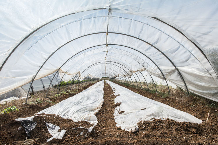 Greenhouse Greenhouse Plants Green Houses Strawberry No People Nature Bed Day Direction Plant Textile White Color Sheet Environment Linen Abandoned Sky The Way Forward Outdoors Absence Diminishing Perspective Land Architecture Polythene