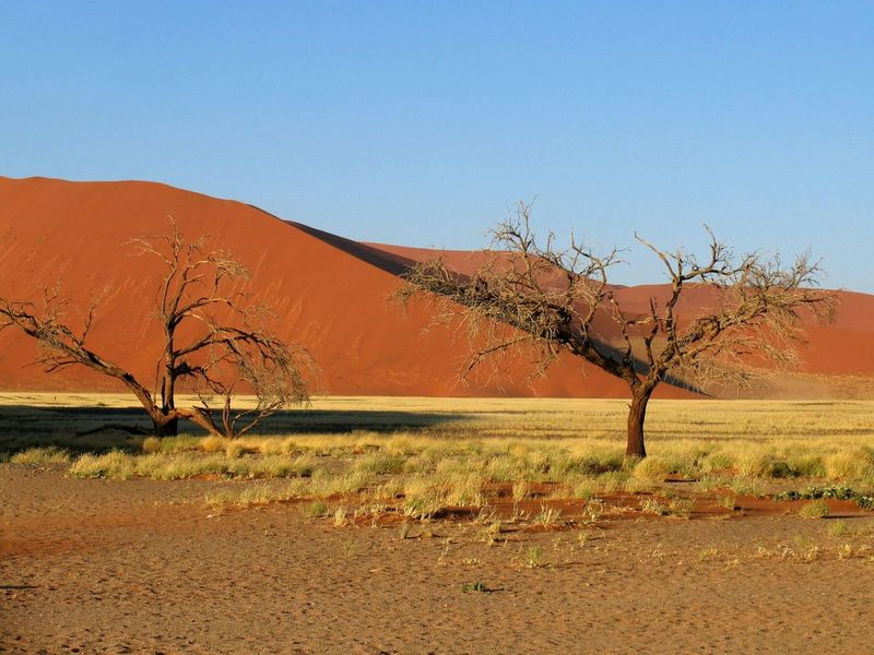 """Sossusvlei"" Sossusvlei Namib Desert Namibia Africa Desert Landscape EyeEm Best Shots The Week On EyeEm Sand Dunes Namib Naukluft National Park Namibian Landscape Scenic Photograghy EyeEm Best Shots - Landscape Landscape Photography Natgeotravelpic EyeEm Vision"