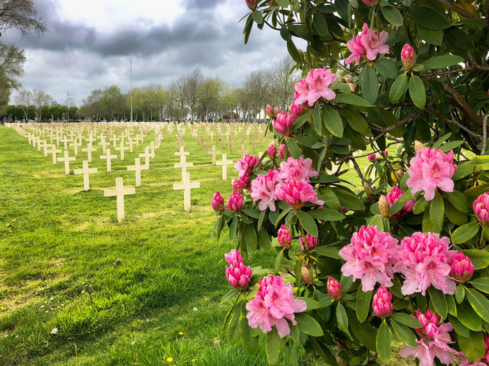 War and peace Tomb Cemetery Cloud - Sky Day Flower Flower Head Flowering Plant Freshness Grass Grave Green Color Growth Military Cemetery Nature No People Outdoors Pink Color Plant Remenber Sky Springtime Tombstone Tree Vulnerability  War