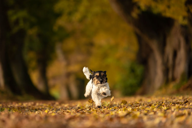 Dog running outdoors