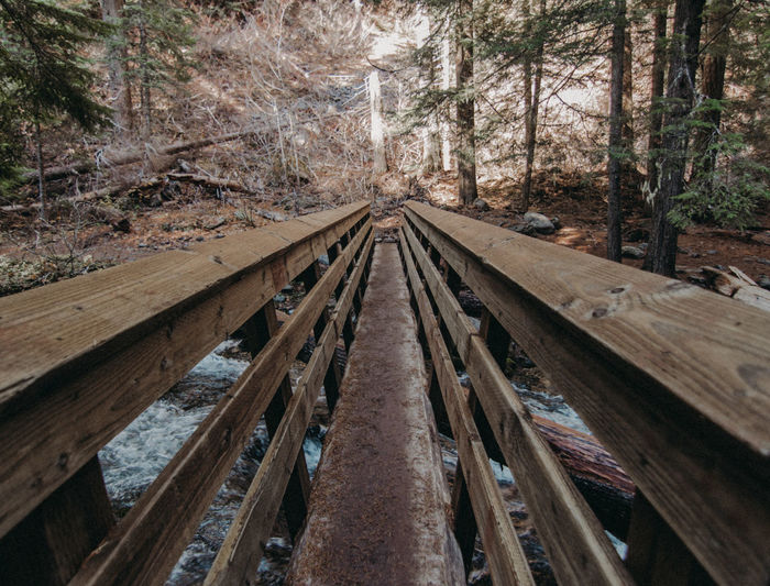 Railroad tracks amidst trees in forest