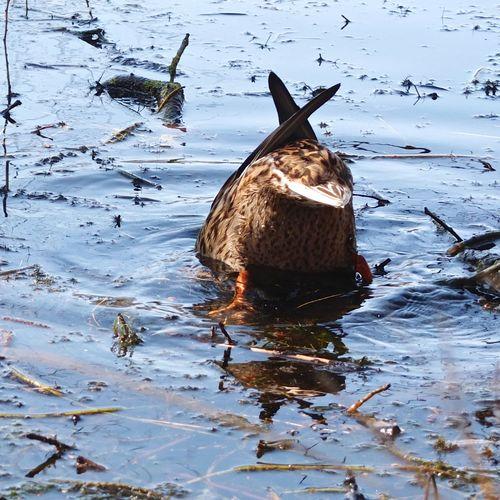 Bird swimming in lake during winter