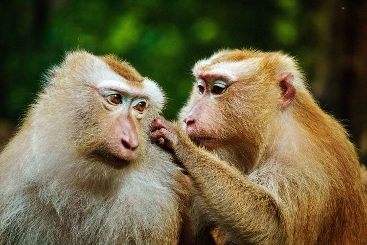 Close-up of monkeys sitting outdoors