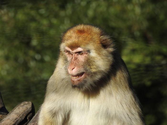 Monkey Focus On