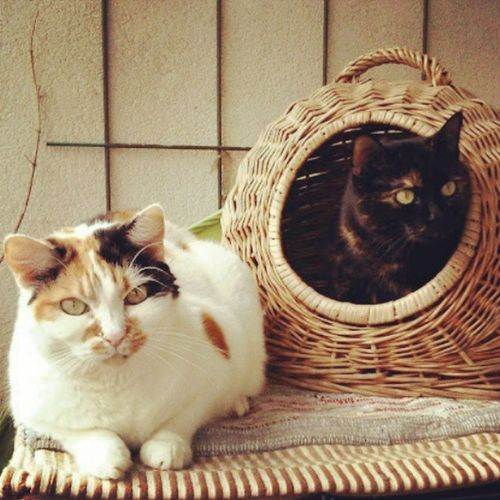 #cat #minki #marie Cat Marie Minki