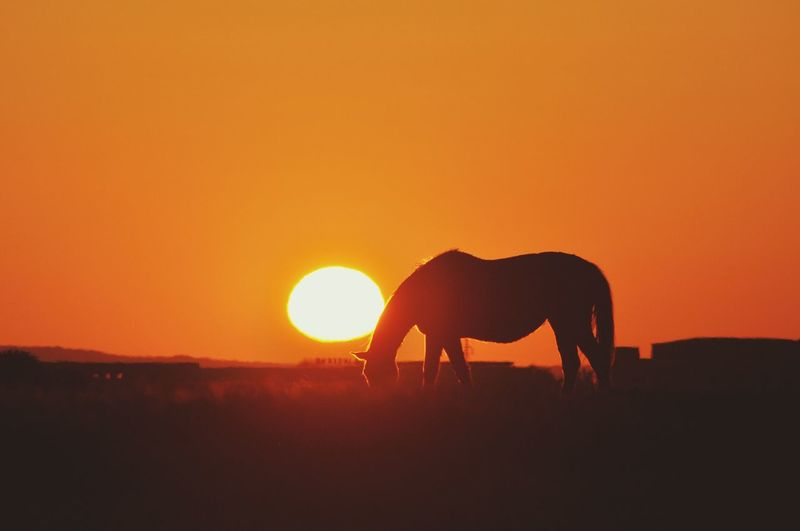 Silhouette of horse on landscape against orange sky
