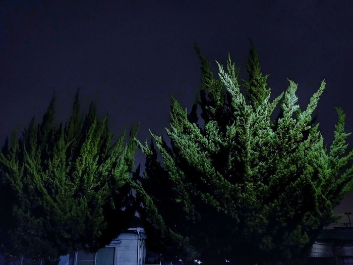 High angle view of plants at night