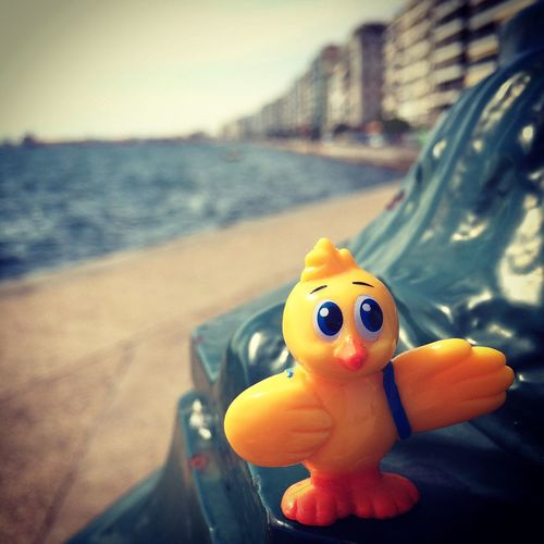 Check This Out Hello World Taking Photos Enjoying Life Artistic Outdoors IPhone The Great Outdoors - 2016 EyeEm Awards IPhoneography The Following Thessaloniki Greece Tourist Attraction  Greece Cosmoduck Duck Ducks Vintage The Street Photographer - 2016 EyeEm Awards Thessaloniki Skg Playground