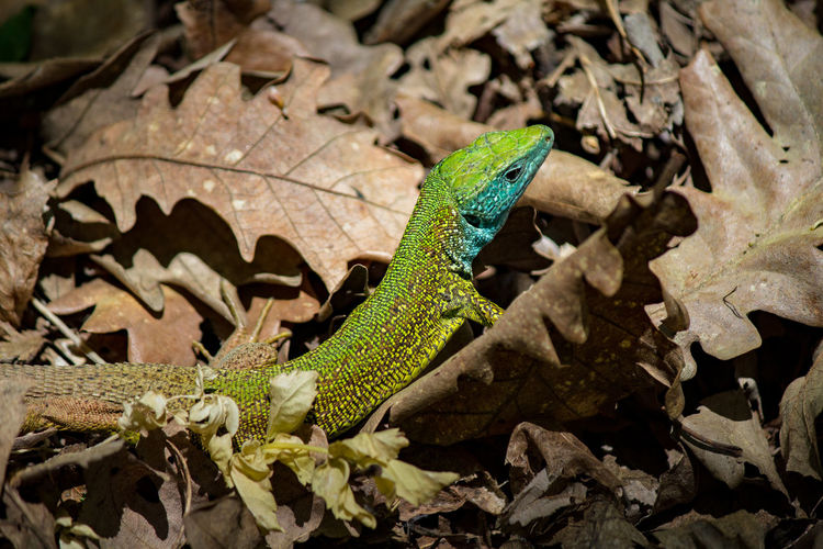 High angle view of lizard on leaves
