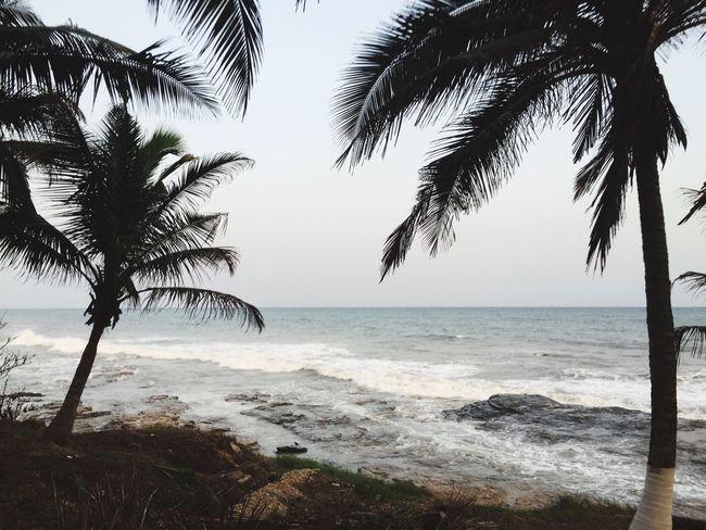 Teshi beach and palm trees