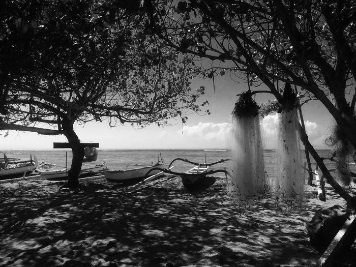 Silhouette trees on sea against sky