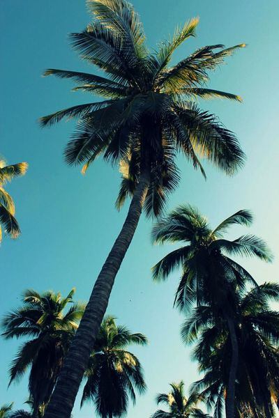 Live For The Story Palm Tree Tropical Climate Tranquility Travel Destinations Sky Low Angle View Nature Beauty In Nature