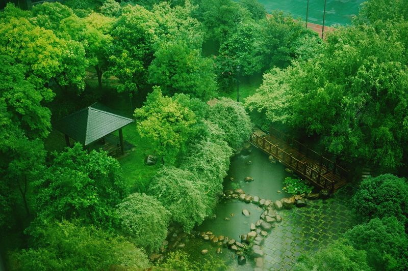 High Angle View Of Gazebo Amidst Trees At Park