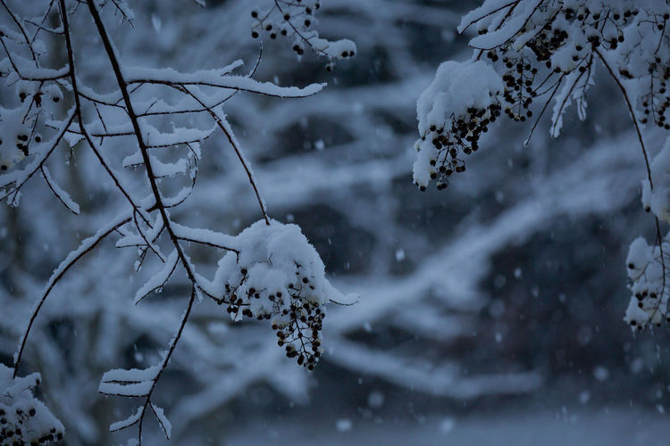 Close-up of snow on branch against blurred background