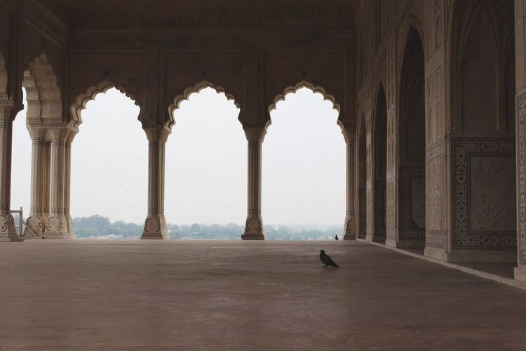 The Architect - 2016 EyeEm Awards Agra fort, beautiful example of Mughal architecture. Agra Fort India Rajasthan Mughalarchitecture Mughal Fort Travel Photography Travel Wanderlust Creativity Building UNESCO World Heritage Site Unesco Travel Destinations Feel The Journey