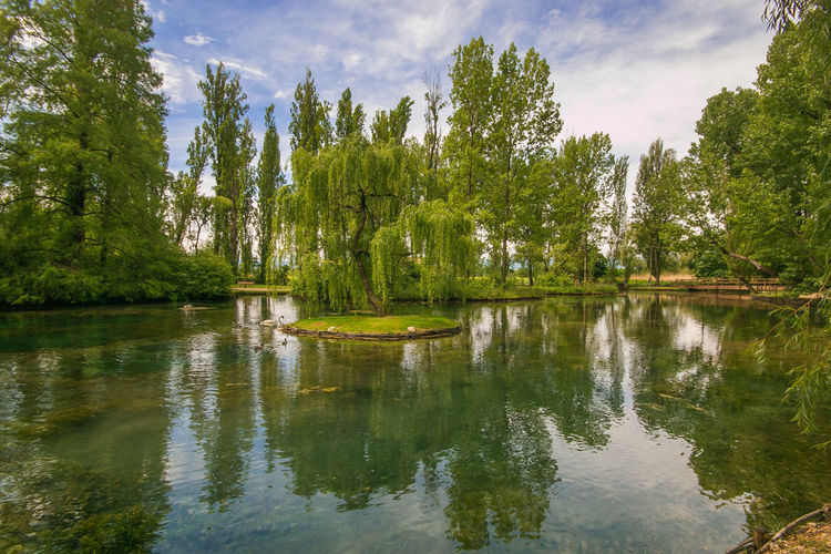 Wonderful view of the famous Fonti del Clitunno in Umbria, Italy Fonti Del Clitunno Fonti Del Clitunno Italy Campello Sul Clitunno Umbria Famous Place Water Nature Willow Tree Landscape Italy Spring Tree Reflection Plant Tranquility Tranquil Scene Lake Beauty In Nature Scenics - Nature Sky Waterfront Growth Cloud - Sky Green Color Day Non-urban Scene Floating On Water Outdoors No People Amazing Romantic Panorama Panoramic Travel Destinations Wanderlust Wallpaper Trip Birds Swan Animals