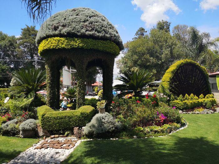 Plants growing in formal garden