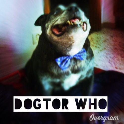 This is my Dogtor Who! He was looking up for some Dalcats! Doctorwho Whoavians Aphotoaday 2013 74of365 I put text on this photo with @Overgram Overgram instagood igers instadaily instahub bestoftheday igdaily jj instagramers