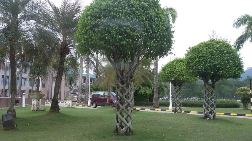 Architecture Grass Green Color IIUM IIUM Gombak Nature Outdoors Park - Man Made Space Tree