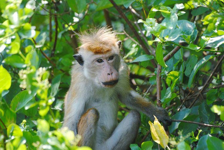 monkey Negambo Lagoon Sri Lanka Sri Lanka Monkey Tree Portrait Leaf Reptile Close-up Plant Green Color