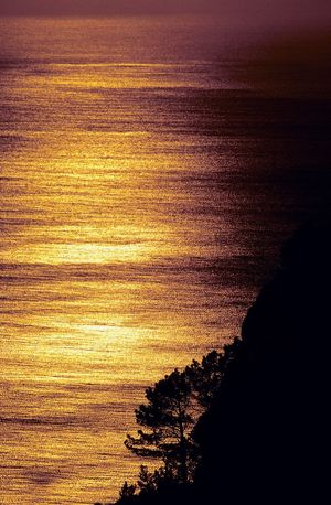 Atlantic Ocean Golden Hour Golden Golden Moment Sunset Nature Beauty In Nature Sea Water Silhouette No People Scenics Tranquility Tree Outdoors Sky