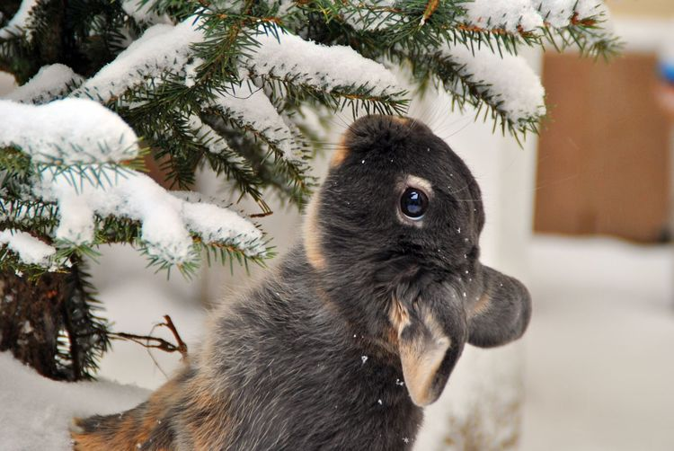 Bunny in snow Rabbit Bunny  Bunny 🐰 Animal Themes One Animal Focus On Foreground No People Close-up Animals In The Wild Nature Tree Indoors  First Eyeem Photo EyeEmNewHere