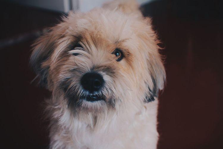 Close-up Dog Animal Pet Photo