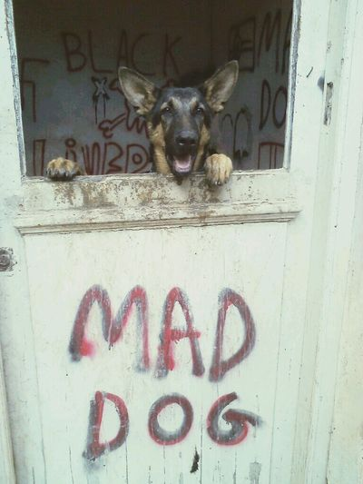 Good morning from my Mad Dog Black... My Dogs Are Cooler Than Your Kids Love♥