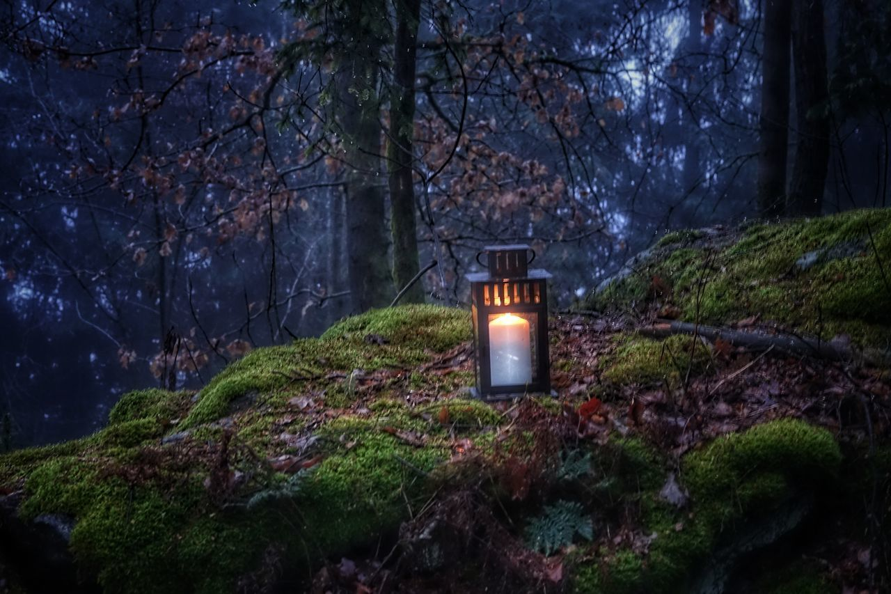 tree, illuminated, plant, nature, night, land, lighting equipment, dusk, forest, no people, candle, cemetery, tranquility, outdoors, lantern, religion, grave, burning, flame