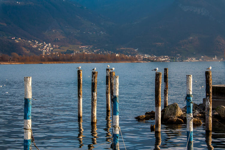Animal Themes Animals In The Wild Beauty In Nature Bird Cormorant  Day Lake Langbart Lovere Mountain Nature No People Outdoors Perching Scenics Sky Tranquility Water Wooden Post