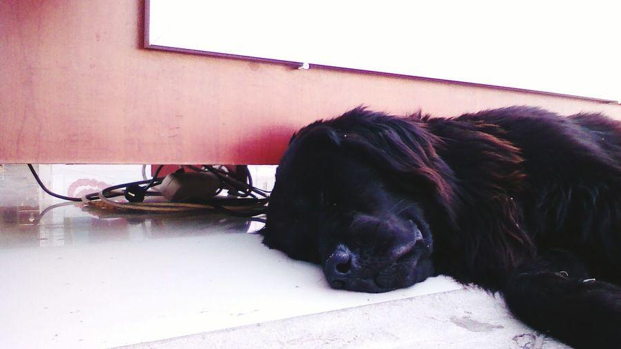 my dogyy