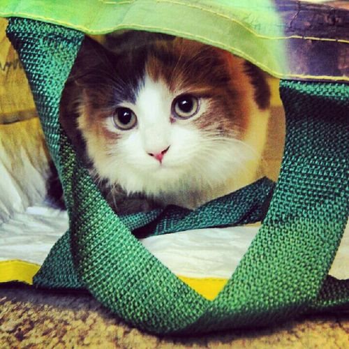 Cat Kitty Animal Taking Photos Pet Cute Ponyo Ponyo In A Bag