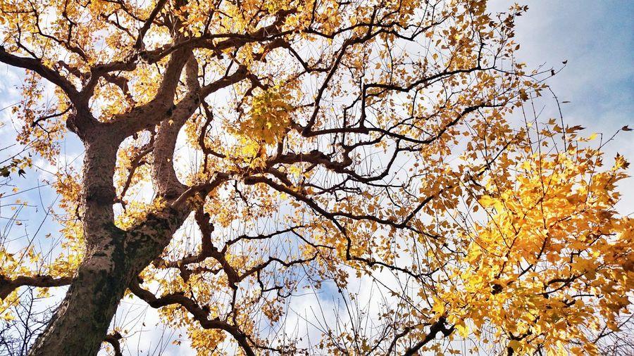 メイン会場の乾通りでまともに撮れた(?)のはこれくらい… Trees Yellow Leaves EyeEm Nature Lover The World Needs More Yellow まだまだ続きます。