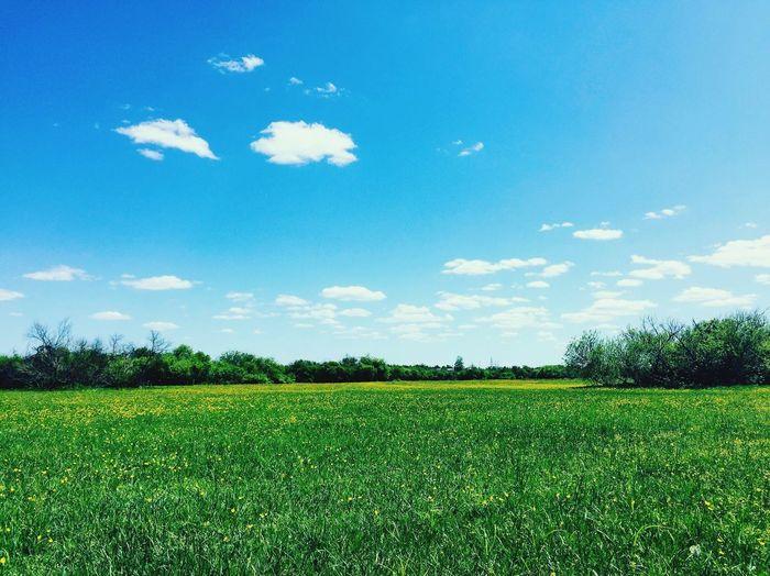Plant Sky Growth Field Land Agriculture Cloud - Sky